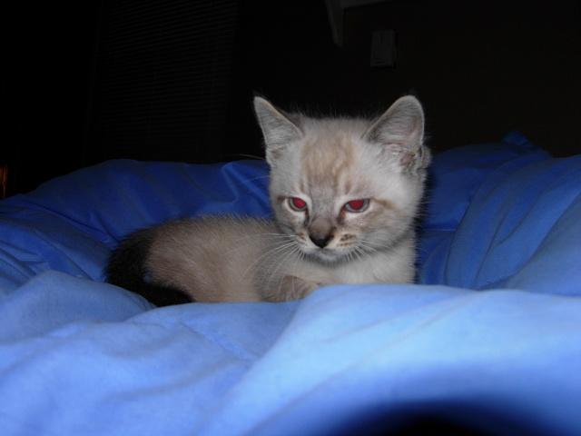 Jack the kitten