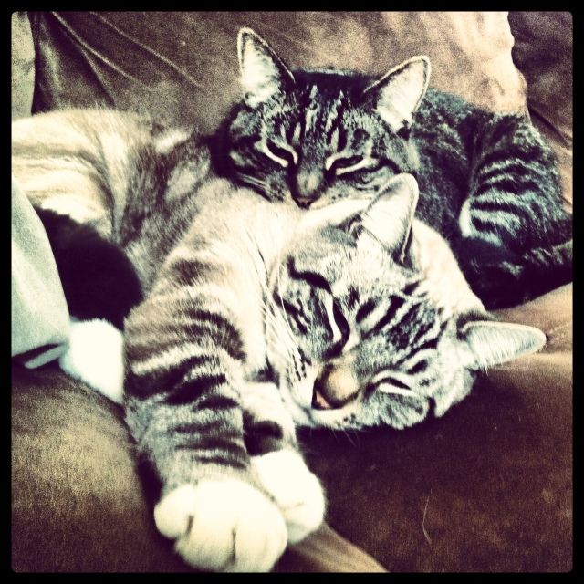 I love these cats!!