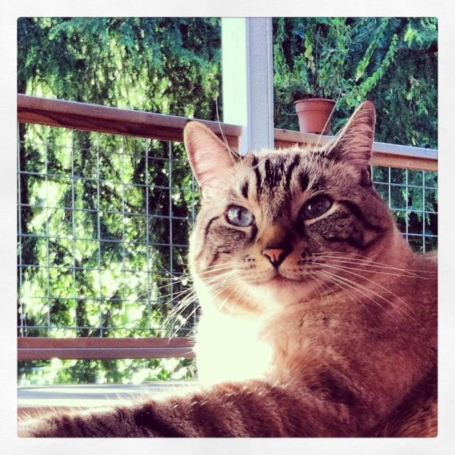 Jack the Cat | Megan's Island Blog