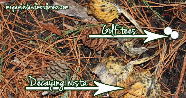 Golf tee hosta markers | Megan's Island Blog