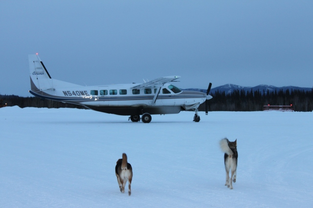 Bettles welcoming committee. Pretty large plane, right?!
