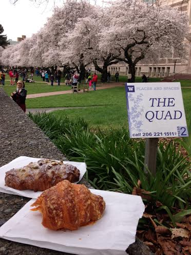 Crumble and Flake at the UW Quad C#UWCherryBlossoms