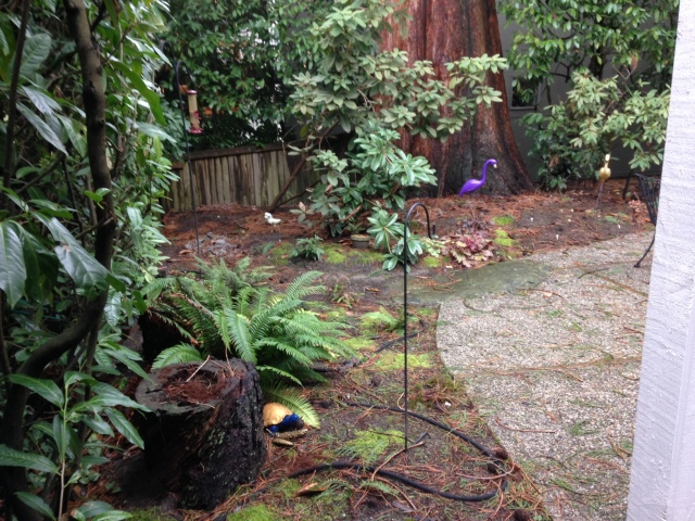 Megan's Island fern garden