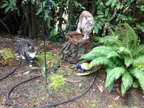 Cats in the fern garden!