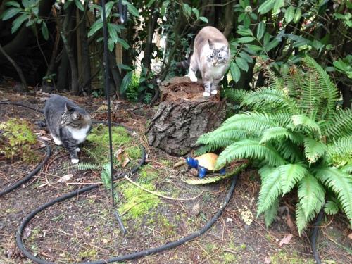Cats in the fern garden!