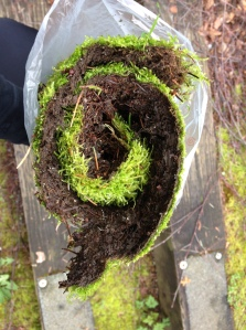 Needed: More moss ground cover