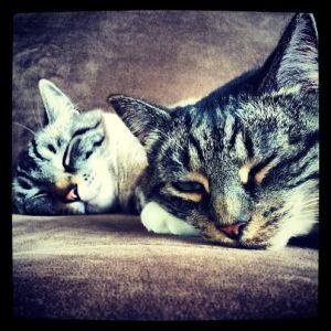 My babies: Maddie & Jack