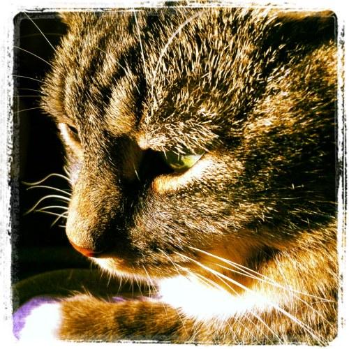 Sweet Maddie Cat