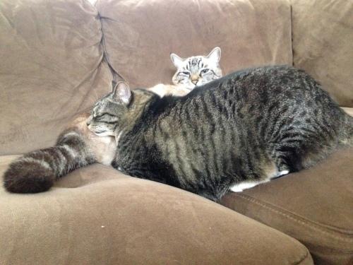 ... Sleeping awkwardly on her brother