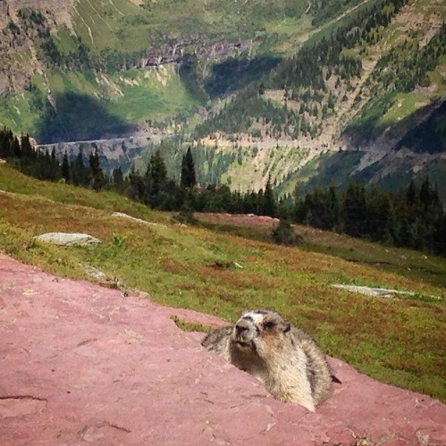 Mrs. Marmot