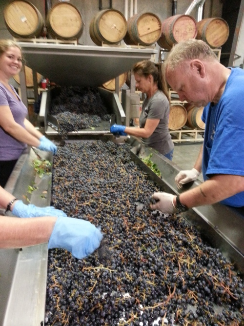 Sorting grapes