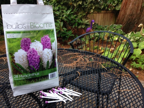 My first time planting bulbs
