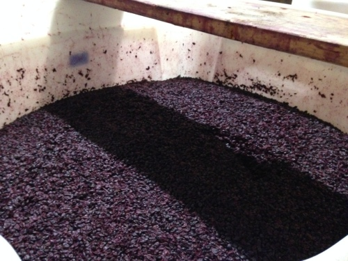 The warm grapes at Stevens -- the fermenting actually creates heat!