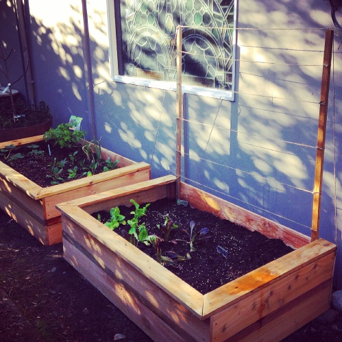 Our new planter boxes/raised beds