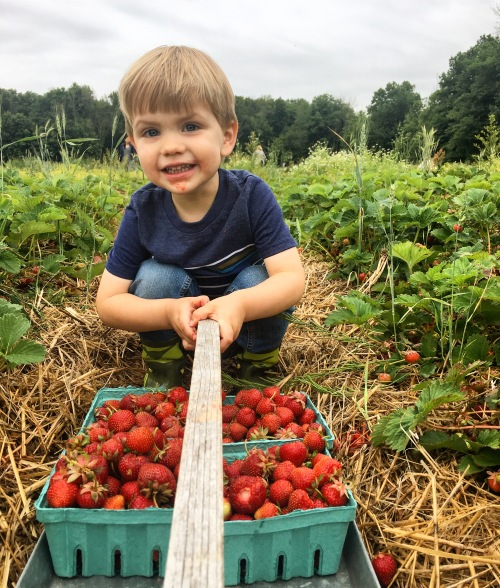 Strawberry picking at Greg's U-Pick