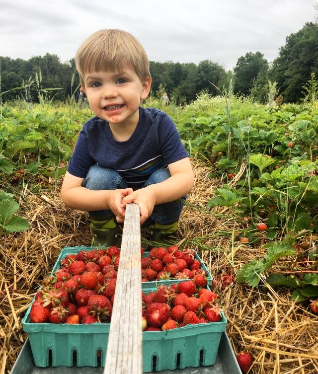 Strawberry picking at Greg's U-Pick