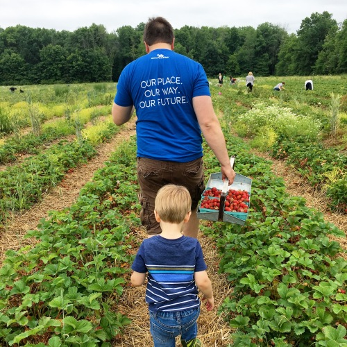 Strawberry picking at Greg's U-Pick Farm in Clarence NY