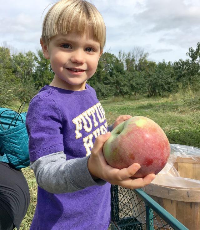 Apple picking at Sanger Farms